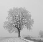 tree-550633_1920